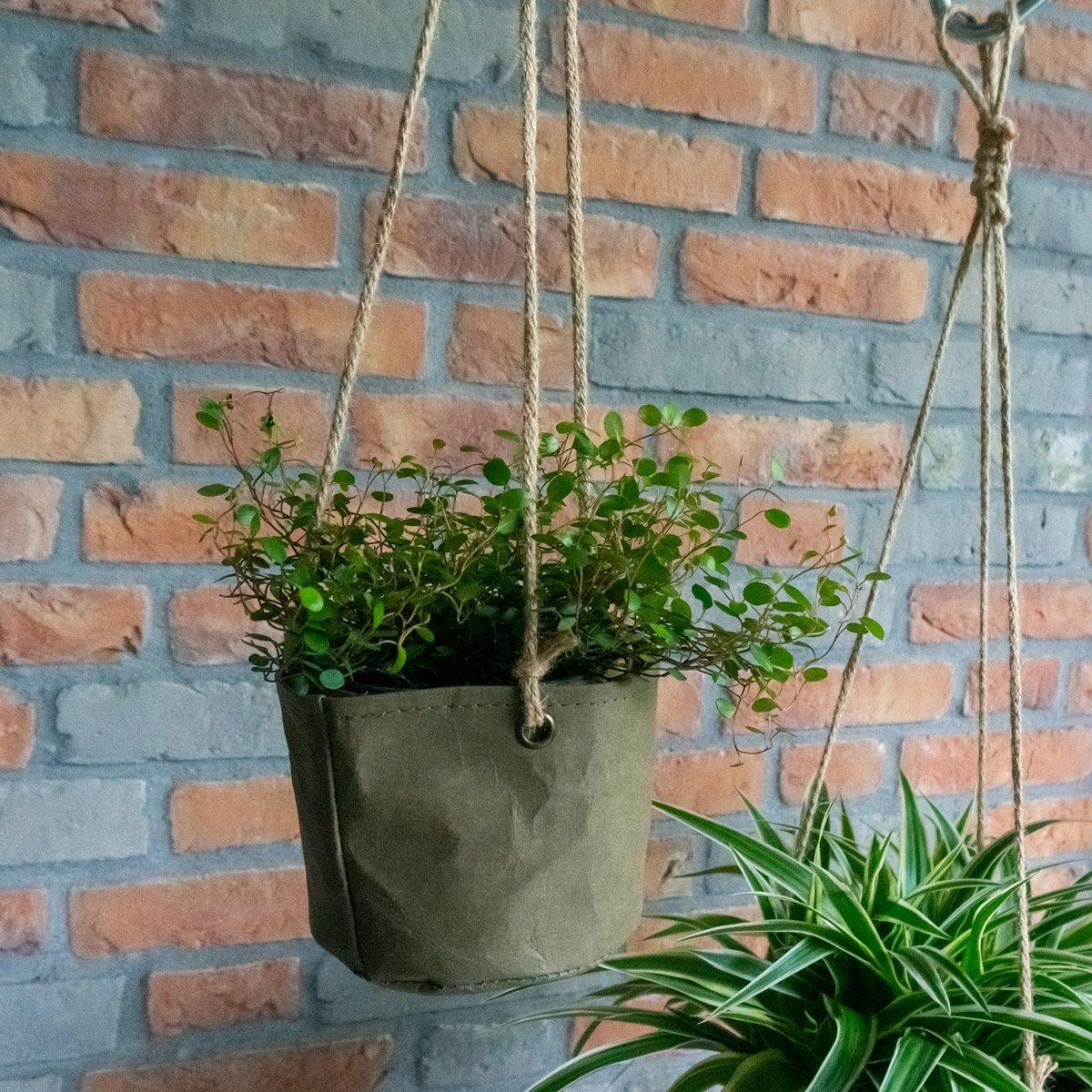 Plant & Flower Pots